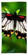 A Real Beauty Butterfly Beach Towel