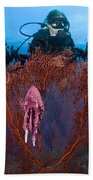 A Red Sea Fan With Sponge Colored Clam Beach Towel