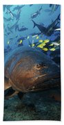 A School Of Golden Trevally Follow Beach Towel
