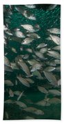 A School Of Tomtate And Glass Minnows Beach Towel