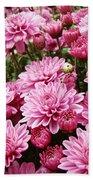 A Sea Of Pink Chrysanthemums Beach Towel