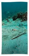 A Southern Stingray On The Sandy Bottom Beach Sheet