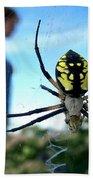 A Spider Beside Her Beach Towel