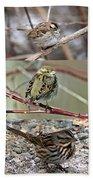 A Study In Sparrows Beach Towel