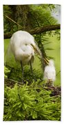 A Tender Moment - Great Egret And Chick Beach Towel