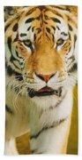 A Tiger Beach Towel