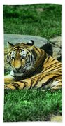 A Tiger's Gaze Beach Towel by Paul Ward