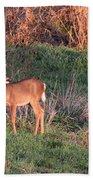 Aah Baby - Deer Beach Towel