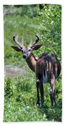 Acadia Buck Beach Towel