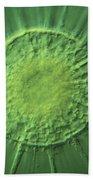 Actinophyrs Lm Beach Towel