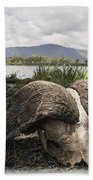 African Cape Buffalo Skull, Ngorongoro Beach Towel