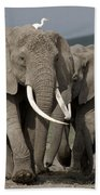 African Elephant Loxodonta Africana Beach Towel