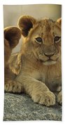 African Lion Three Cubs Resting Beach Towel