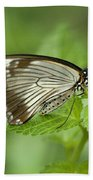 African Papilio Dardanus Butterfly Beach Towel
