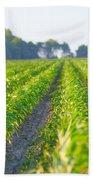 Agriculture- Corn 1 Beach Towel