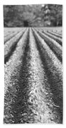 Agriculture-soybeans 6 Beach Towel