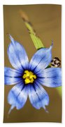 Alabama Blue-eyed Grass Wildflower - Sisyrinchium Angustifolium Beach Towel
