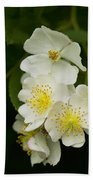 Alabama Wildflower Roses - Rosa Multiflora Beach Towel