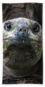 Aldabra Tortoise Beach Towel