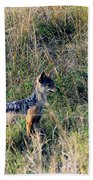 Alert Jackal Beach Towel