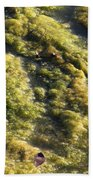 Algae Bloom In A Pond Beach Towel