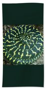 All Coiled Up Beach Towel