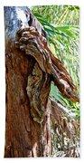 Alligator Cypress Knot Beach Towel