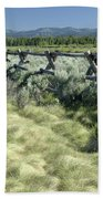 Along The Fence Beach Towel