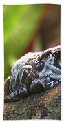 Amazon Milk Frog Beach Towel