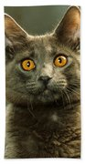 Amber-eyed Domestic House Cat Beach Towel