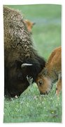 American Bison Cow And Calf Beach Towel