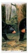 American Black Bear, 1844 Beach Towel