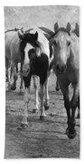American Quarter Horse Herd In Black And White Beach Towel