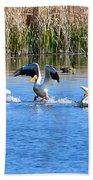 American White Pelicans Beach Towel