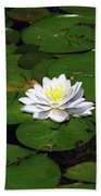 American White Waterlily Beach Towel