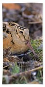 American Woodcock Bird Beach Towel