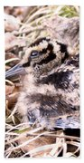 American Woodcock Chick Beach Towel