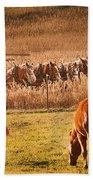 Amish Transportatin All Sizes Beach Towel
