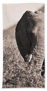 An Elephant Walking In The Bush Samburu Beach Towel