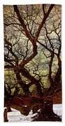 Ancient Winter Tree Beach Towel