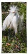 Angry Bird Snowy Egret In Breediing Plumage Beach Towel