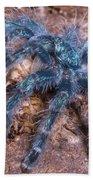 Antilles Pinktoe Tarantula Beach Towel