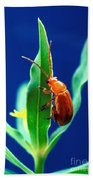 Aphthona Flava Flea Beetle On Leafy Beach Towel