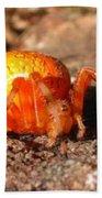 Araneus Marmoeus Beach Towel