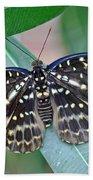 Archduke Butterfly Beach Towel