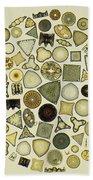 Arrangement Of Diatoms Beach Towel