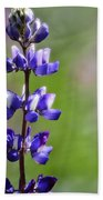 Arroyo Lupine  Beach Towel
