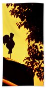 As A Rooster Crows Beach Towel by Carolyn Marshall