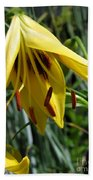 Asiatic Lily Named Black-eyed Cindy Beach Towel