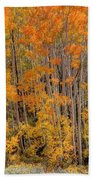 Aspen Forest In Fall - Wasatch Mountains - Utah Beach Towel